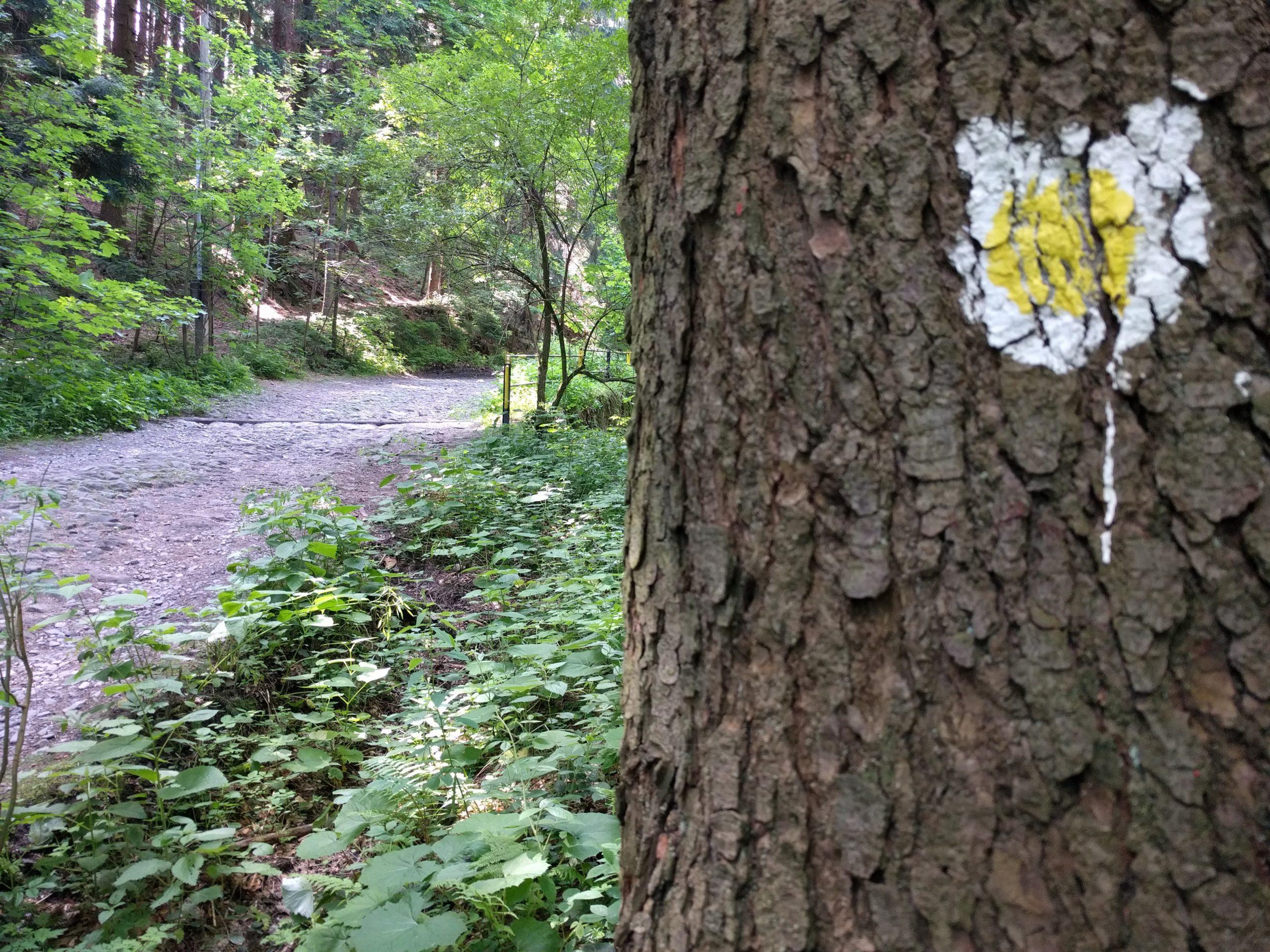 Žlutá medvědí stezka