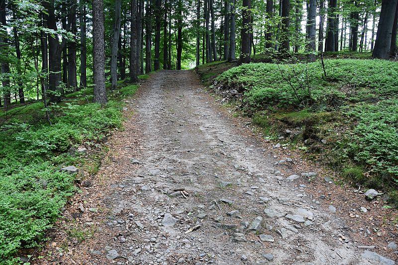 stará původní lesní cesta
