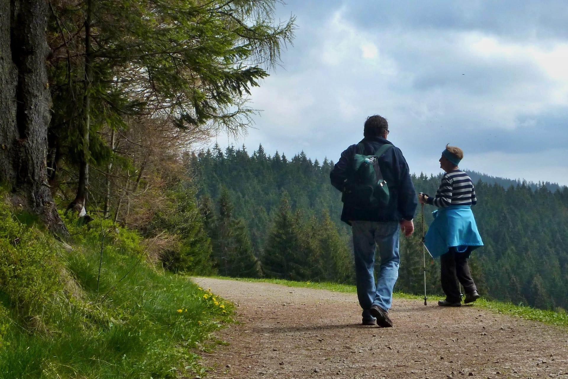 Malebná cesta krajem lesa s výhledem na hory