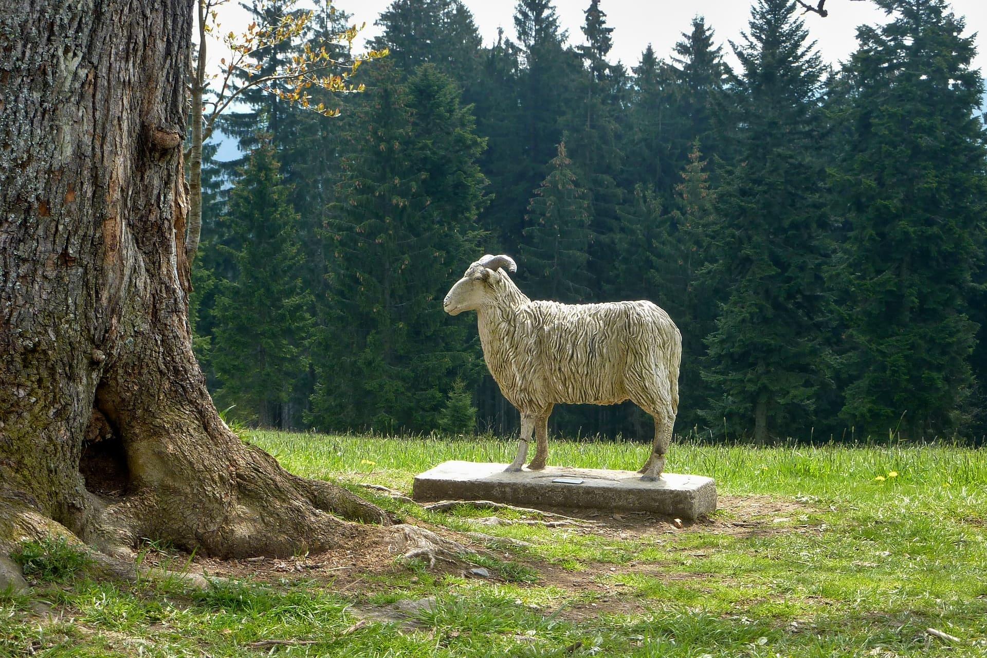 Pomník ovce valašky
