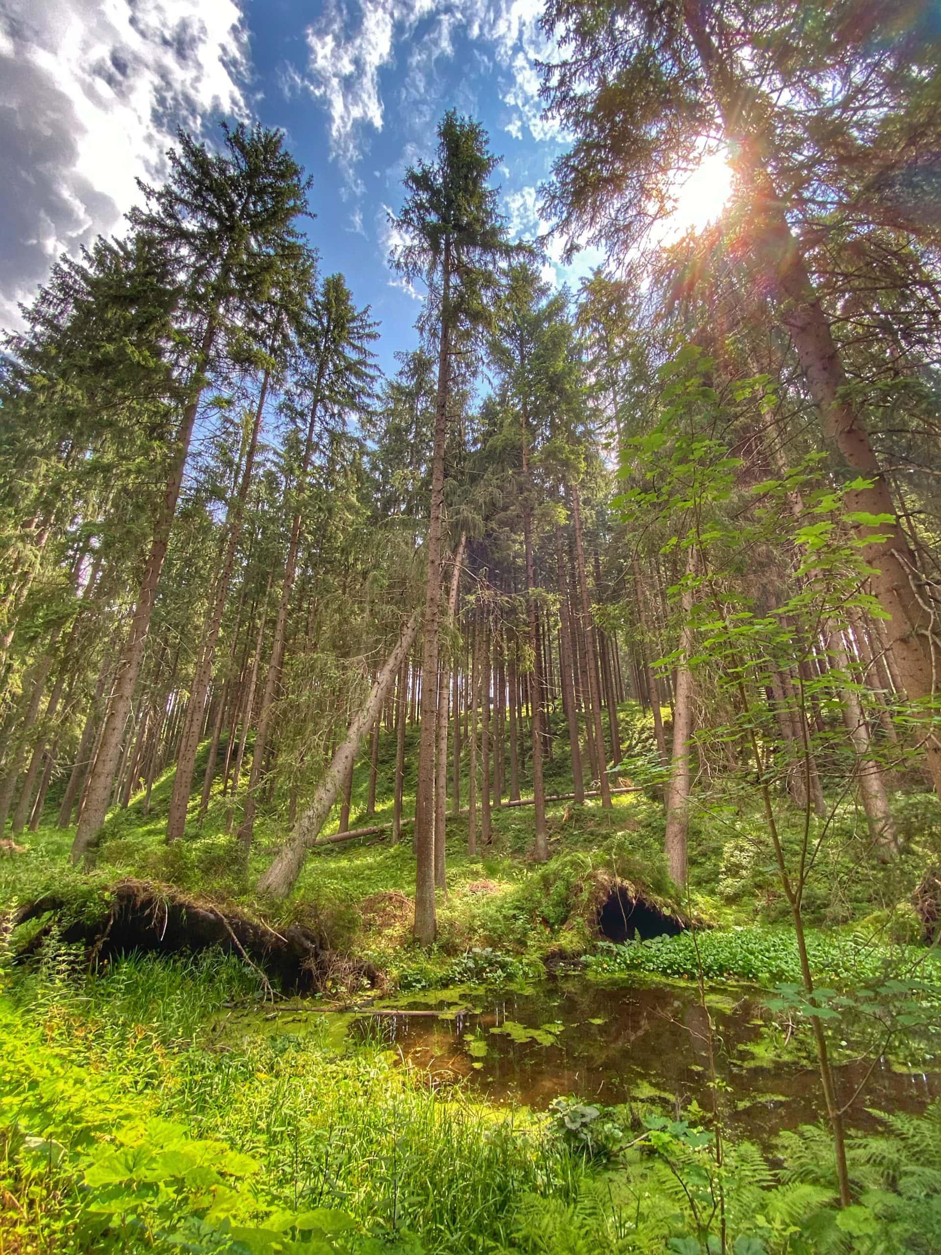 Les cestou k Horské chatě Doroťanka