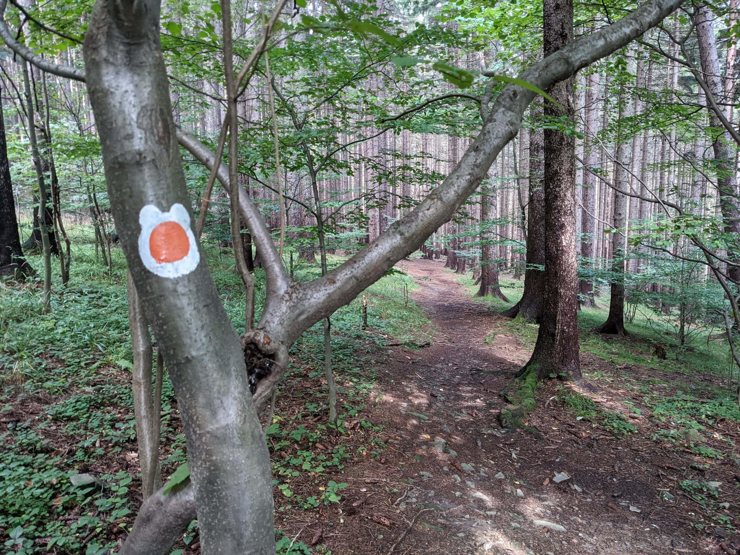 Oranžová liščí stezka